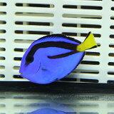 ナンヨウハギ Sサイズ 3-4.5cm±! ハギ 海水魚 餌付け(t119