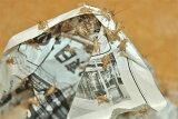 【増税前よりお得!エントリー必須&楽天カードで最大14倍】ヨーロッパイエコオロギ S 50匹 爬虫類/両生類/エサ/小動物/コオロギ/ミルワーム/生餌