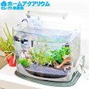 【送料無料】ホームアクアリウムオールセット セレクト熱帯魚 36cm水槽 飼育に必要なもの全てお届け 初...