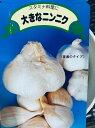 ジャンボにんにく 種 200g(鱗片約6~8コ)※種サイズS 種はバラした状態です。大人の握りこぶし位になる大きさ 臭い味はマイルドでとても食べやすい 9〜10月植え 6〜7月収穫 スタミナ野菜 栽培説明レッテル付き 島根県産 国産 栽培用 種球 ガーリック