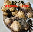 キクイモ 種芋 300g 土付き 植え付け約8〜10株分 煮物・サラダ・炒め物などに 菊芋 健康野菜球根