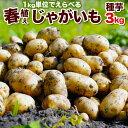 2月28日まで100円OFF じゃがいも 種芋 3kg 男爵 キタアカリ メークイン とうや 合計3キロになるように選択 北海道産検査合格済馬鈴薯種 タネイモ M、Lサイズ
