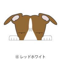 見てまステッカー犬ウィペット犬ステッカー車窓玄関見てます犬種別名入れビッグサイズグッズドッグシールカーステッカー【ウィペット】