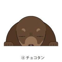 見てまステッカー犬ダックスフンドステッカースムースダックスダックススムースダックスフントスムースヘアードカニンヘン車犬ステッカー窓玄関見てます犬種別名入れビッグサイズグッズドッグシールカーステッカー【ダックスフンド】