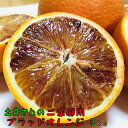 【先行予約】農家直送!土井さんの濃厚ブラッドオレンジ(ご家庭用) 3kg【送料無料】【訳あり】【北海道・沖縄はお届け不可】
