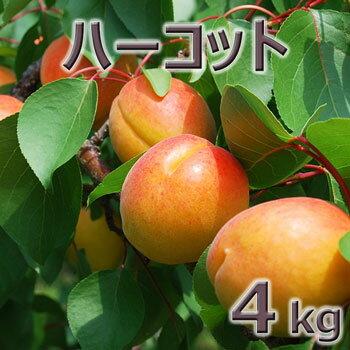 フルーツ・果物, あんず 2020 4kg64kg2kg2(330)