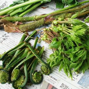 2021年 予約4月下旬〜出荷予定4〜5種の山菜セット2人分くらいの量(大小バラ詰)※送料別