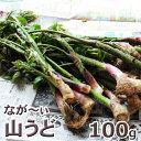 長いヤマウド100g予約販売天然・長い山ウド(50〜70cm...