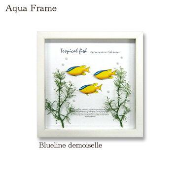アートフレーム 壁 インテリア 玄関 壁飾り 壁面装飾 おしゃれ かわいい 熱帯魚 壁掛け 天然木 壁面 パネル フェイク 壁掛け 雑貨 カフェ プレゼント ギフト リビング ダイニング インテリア 玄関 魚 水槽 子供部屋 キッズ Aqua Frame Blueline demoiselle