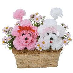 光触媒 フラワー カーネーション 花 観葉植物 アレンジメント かわいい 犬 アートフラワー イミ...