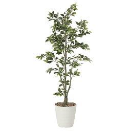 光触媒 観葉植物 植物 人工観葉植物 インテリア おしゃれ グリーン フィカスツリー 高さ180cm