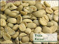 トラジャ・カロシ 選べる焙煎豆 200g 【ストレートコーヒー】 「幻のコーヒー」の名にふさわしい、独特の香り・濃厚なコクと口当たりの柔らかさ。