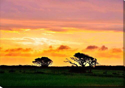 風景写真パネルキャンバス地 青沖縄黒島の朝日と木 72.8×51.5cm sok-006-b2 側面までプリント 絵...