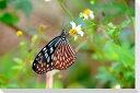 沖縄波照間島の蝶風景写真パネルクロス地24×16cmCLO-HT-002-P2沖縄名所の美しい風景写真 パネル。インテリア ディスプレイ 模様替え タペストリー 風景ポスターに最適。新築祝い 引っ越し祝いプレゼントなどにも。