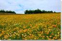 北海道美瑛の花畑風景写真パネル壁掛けタペストリー新築祝い出産祝い結婚祝い