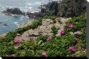 北海道襟裳岬にハマナスの花クロス地壁掛け60.6×45.5cmHOK-19-P12【楽ギフ_包装】【楽ギフ_のし宛書】【楽ギフ_名入れ】壁飾りやインテリアに美しい風景写真パネルを。 ディスプレイ タペストリー に最適。新築祝い プレゼントなどにも。