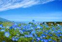 ポストカード ネモフィラ 花の風景写真 どれでも5枚以上で【送料無料】空と海の青とネモフィラ 茨城 ひたち海浜公園 ポストカード 絵はがき 風景 写真 ギフト お祝い プレゼント お手紙 旅の思い出 PSC-19の商品画像