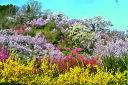 ポストカード5枚で【送料無料】花見山5 桜満開 福島市さくら...