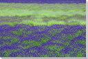 北海道富良野ラベンダー畑風景写真パネルクロス地24×16cmCLO-07-P2壁飾りやインテリアに北海道の風景パネルを。インテリア ディスプレイ 模様替え タペストリー 風景ポスターに最適。新築祝い 引っ越し祝いプレゼントなどにも。