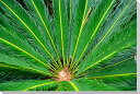 沖縄 鳩間島のソテツ クロス地 風景写真パネル インテリア アート 壁掛け ウォールデコ CLO-20-P3【楽ギフ_包装】【楽ギフ_のし宛書】【楽ギフ_名入れ】インテリア 模様替え タペストリー 風景ポスターに最適。新築祝い 引っ越し祝いプレゼントなどにも。