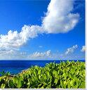 沖縄 北大東島の海2 モンパノキ キャンバス地 風景写真パネル グラフィック ボタニカル アートパネル 絵画 タペストリー CLO-29-S3【楽ギフ 包装】 【楽ギフ のし宛書】 【楽ギフ 名入れ】