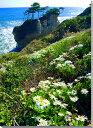 日立浜菊風景写真パネル壁飾りやインテリアに美しい風景写真パネルを。インテリア ディスプレイ 模様替え タペストリー 風景ポスターに最適。新築祝い 引っ越し祝いプレゼントなどにも。
