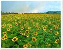 ひまわり猪苗代高原福島風景写真パネル 壁飾りやインテリアに美しい風景写真パネルを。ディスプレイ 模様替え タペストリー 風景ポスターに最適。新築祝い 引っ越し祝いプレゼントなどにも。