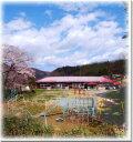 茂庭分校と桜 福島 風景写真パネル 60.6×60.6cmFUK-70-S12 【楽ギフ_包装】 【楽ギフ_のし宛書】 【楽ギフ_名入れ】