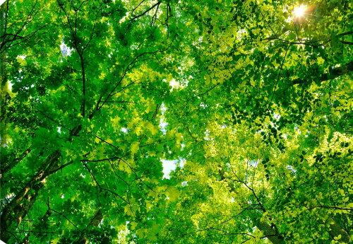 木漏れ日 新緑と太陽 不動滝付近 福島 キャンバス地 風景写真ファブリックパネル 72.8×51.5cm FUK...