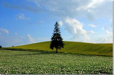 北海道美瑛 クリスマスツリーの木 風景写真パネル 80.3×53cm HOK-116-M25【楽ギフ_包装】 【楽ギフ_のし宛書】 【楽ギフ_名入れ】