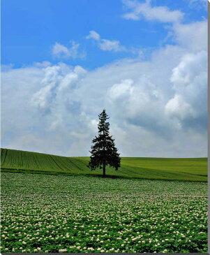北海道美瑛 クリスマスツリーの木 風景写真パネル 80.3×65.2cm HOK-167-F25【楽ギフ_包装】 【楽ギフ_のし宛書】 【楽ギフ_名入れ】
