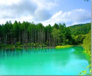 北海道美瑛 白金 青い池 風景写真パネル 72.7×60.6cm HOK-34-F20【楽ギフ…