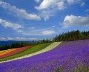 ポスターとは違うそのまま飾れる額のいらないインテリア北海道中富良野 ファーム富田 花畑 ...