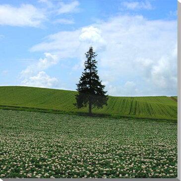 北海道美瑛 ジャガイモの花とクリスマスツリーの木 風景写真パネル 80.3×80.3cm HOK-45-S25【楽ギフ_包装】 【楽ギフ_のし宛書】 【楽ギフ_名入れ】