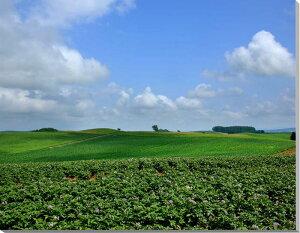 ポスターとは違うそのまま飾れる額のいらないインテリア北海道美瑛 ジャガイモ畑と雲 風景写...