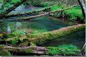 日光赤沼の倒木風景写真パネル53×33.3cmNIK-017-M10壁飾りやインテリアに美しい風景写真パネルを。インテリア ディスプレイ 模様替え タペストリー 風景ポスターに最適。新築祝い 引っ越し祝いプレゼントなどにも。