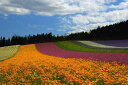 ポストカード5枚で【送料無料】北海道 中富良野 ファーム富田 花畑 PST-128