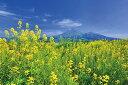 ポストカード 磐梯山と菜の花 福島会津 花の風景写真 どれで...