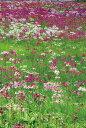 写真パネルのあぁとすぺーすつくばで買える「ポストカード5枚で【送料無料】絵はがき 日光 千手ヶ浜 クリンソウの花々 栃木県日光市 風景 写真 ギフト お祝い プレゼント お手紙 旅の思い出 PST-94」の画像です。価格は108円になります。