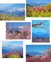 ポストカード 吾妻山の雪うさぎお得な6枚セット【送料無料】桜...