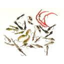 ドライフライ カディス フラップ(#14) 完成品フライ フライ フィッシング 毛鉤 釣り ヤマメ イワナ アマゴ 渓流 管理釣り場