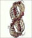 【アートポスター】メビウスの輪(550×650mm) -エッシャー-
