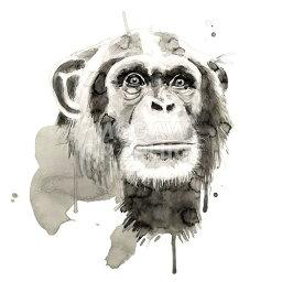 【Philippe Debongnie アートポスター】CHIMP(305×305mm) -おしゃれインテリアに- チンパンジー・動物