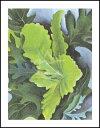 【アートポスター】緑の樫の葉(281×358mm) -オキーフ-