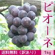 【訳あり】ぶどう ピオーネ(1kg)【送料無料】