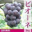 ぶどう ピオーネ(3kg)ギフト【送料無料】