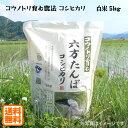 こうのとり米 白米(5kg)六方たんぼのコシヒカリ コウノトリ育む農法 兵庫県産【送料無料】