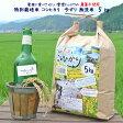 玄米 白米 今ずり米 無洗米 農薬不使用 コシヒカリ【5kg】