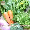 野菜 お米 詰め合わせ 満足セット 農薬不使用 訳あり 不揃い【送料無料】