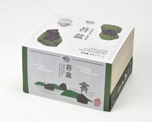 苔盆スナゴケ栽培キット苔庭園栽培セット観葉植物ガーデニング聖新陶芸ギフトプレゼント